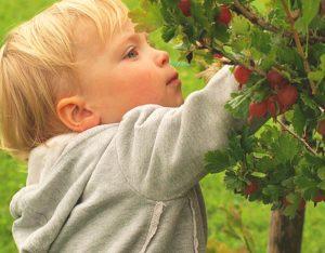 Verdura, frutta e cereali integrali per un intestino più sano