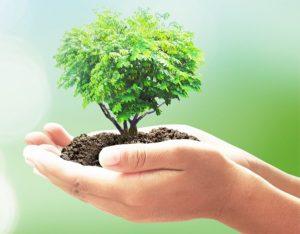 Attività: l'albero delle buone abitudini!