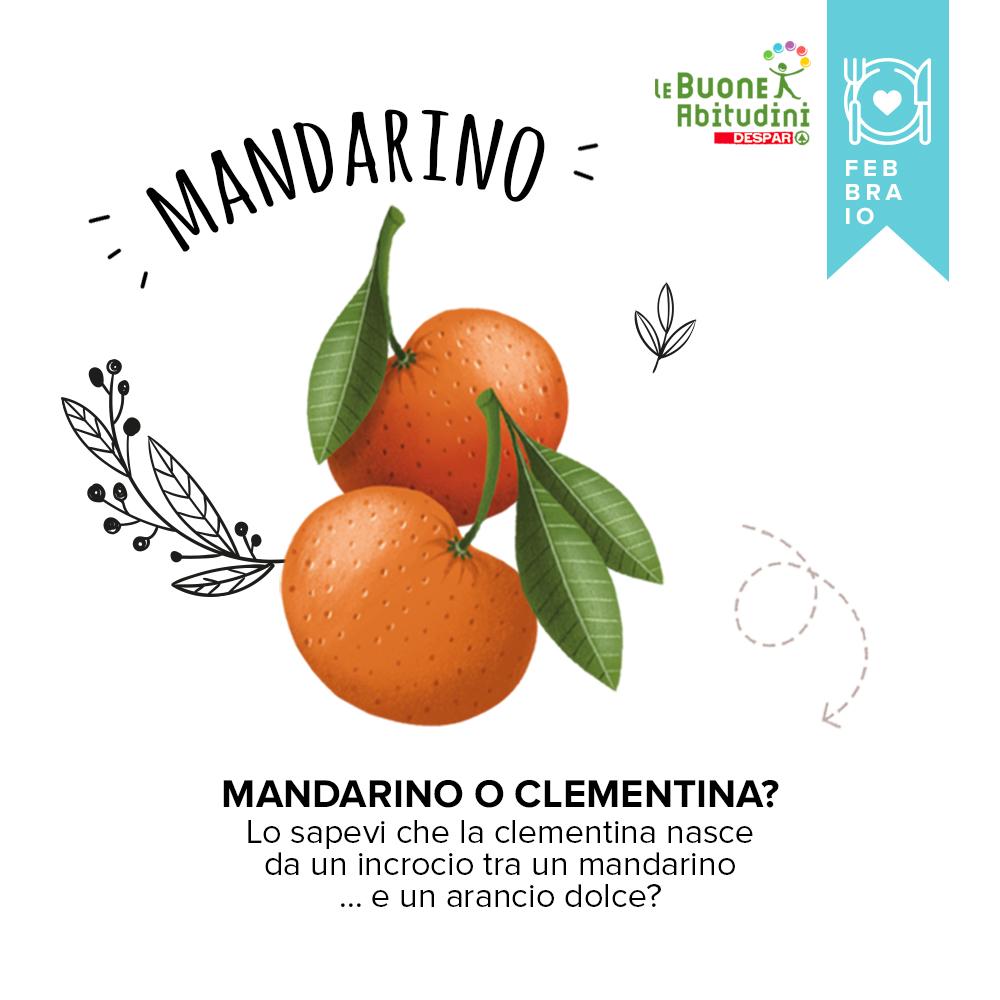 Orto-Scuola: il Mandarino