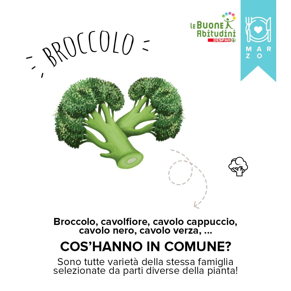 Orto-Scuola: il Broccolo