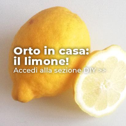 Orto in casa: il limone!